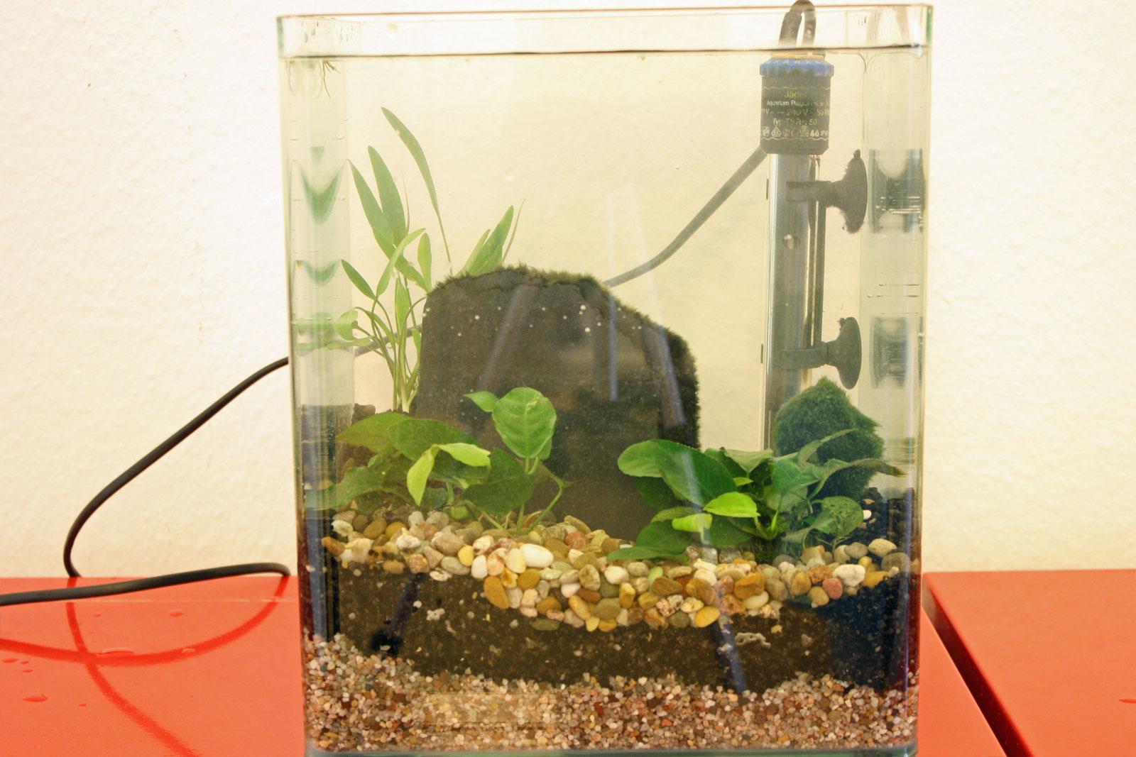 aquarium eingerichtet