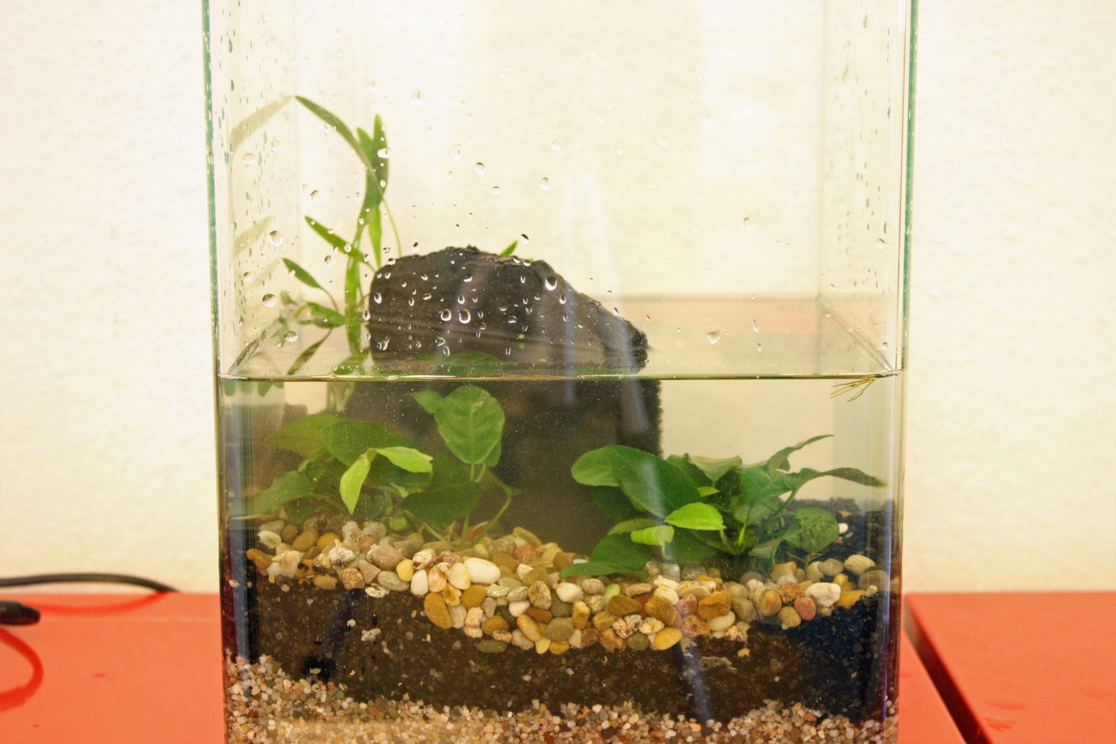 nano aquarium einrichten. Black Bedroom Furniture Sets. Home Design Ideas