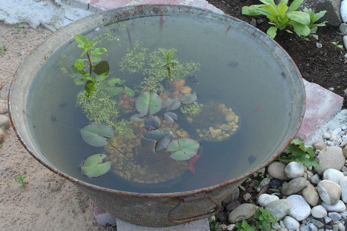 pflanzen schnecken im aquarium